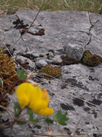 The Flowery Burren - Micro